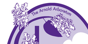 Two-color T-shirt design for the Arnold Arboretum's annual festival, Lilac Sunday, which features tours of the lilac gardens, dance performances, picnicking, and other family-friendly activities. Scalable vector graphic.
